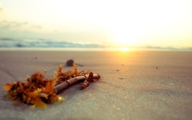Beach macro wallpaper