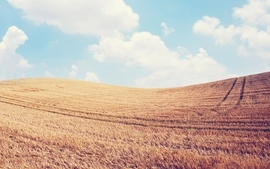 Clouds landscapes nature fields wheat skydoll skyscapes wallpaper