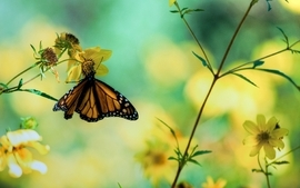 Flowers insects bokeh butterflies wallpaper