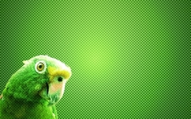 Green birds parrots wallpaper