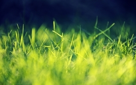Green nature grass sunlight wallpaper
