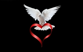 Hearts white dove wallpaper