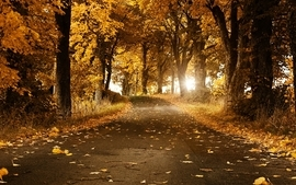 Landscapes nature leaf trees autumn leaves seasons sunlight wallpaper