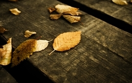 Leaves wood panels wood floor wallpaper