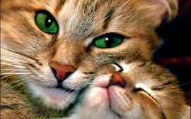 Love cats animals green eyes kittens adorable wallpaper