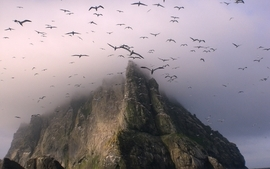 Mountains nature birds fog wallpaper