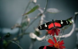 Nature bugs macro butterflies wallpaper