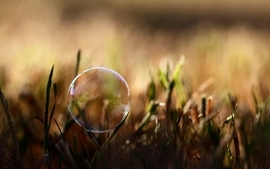 Nature grass bubbles macro depth of field wallpaper