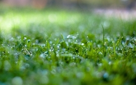 Nature grass water drops macro depth of field wallpaper