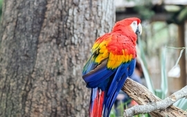 Parrots birds wallpaper