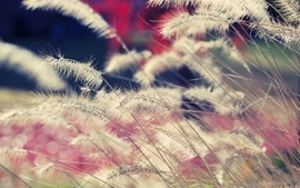 Plants depth of field wallpaper