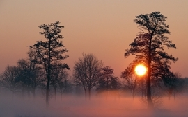 Sunset landscapes trees fog wallpaper