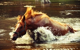 Water animals horses wallpaper