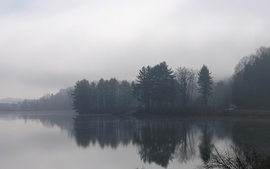 Water trees fog mist lakes rivers reflections wallpaper